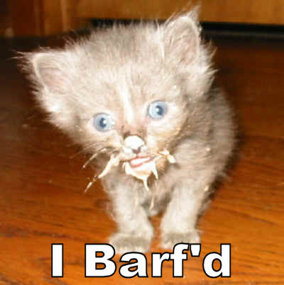 I-barfd